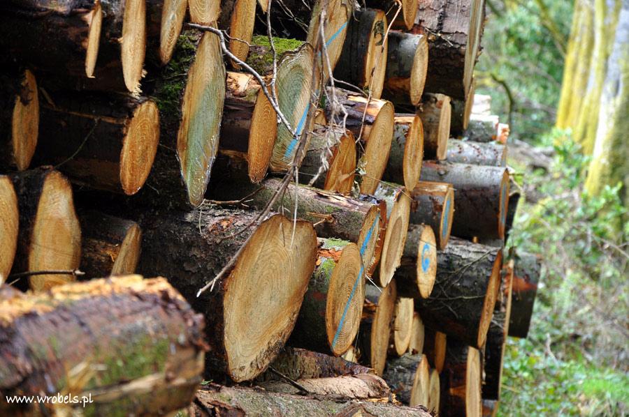 Drewno gotowe do wyjazdu...