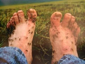 Komary - wielka zmora Syberii
