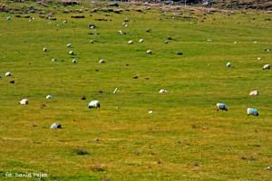 Trawa, trawa, dużo trawy! Beeee! :)