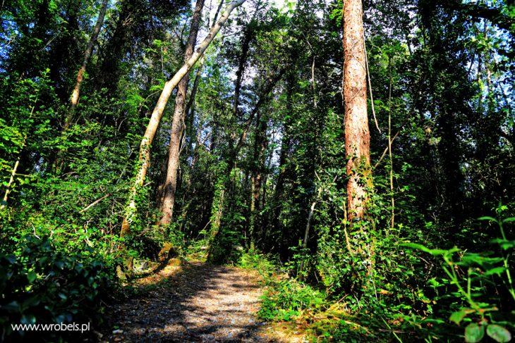 Lanesborough-Forest