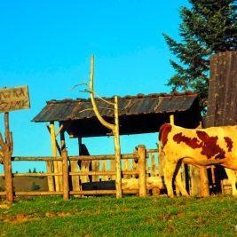 Dziki Zachód w Małych Pieninach