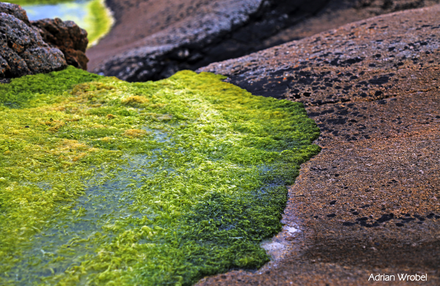 Gurteen-Beach-2.jpgA