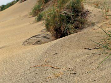 Gurteen Beach 6